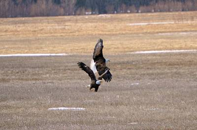 Photograph - The Eagle Has Landed by Bonfire Photography