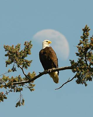 Photograph - The Eagle Has Landed by Jeff Cook