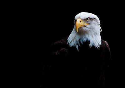 Eagle Photograph - The Eagle by Lauren Metcalfe