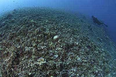 Wildlife Disasters Photograph - The Effects Of Reef Bombing By Dynamite by Steve Jones