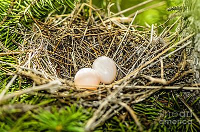 The Eggs In The Nest Print by Viktor Birkus