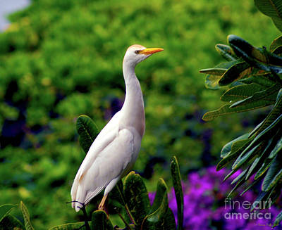 Photograph - The Egret Outside My Window by Patricia Griffin Brett