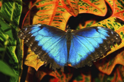 Photograph - The Electric Blue Morpho Butterfly  by Saija  Lehtonen
