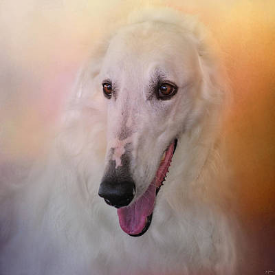 Photograph - The Elegant Borzoi by Jai Johnson