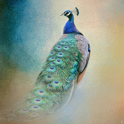 Photograph - The Elegant Peacock - Wildlife by Jai Johnson