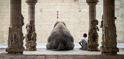 Meditation Photograph - The Elephant & Its Mahot by Ruhan