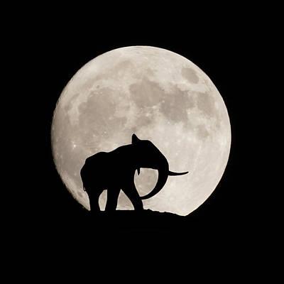 Digital Art - The Elephant by Ernie Echols