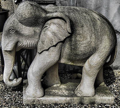 Photograph - The Elephant Not In The Room by Michael Canning