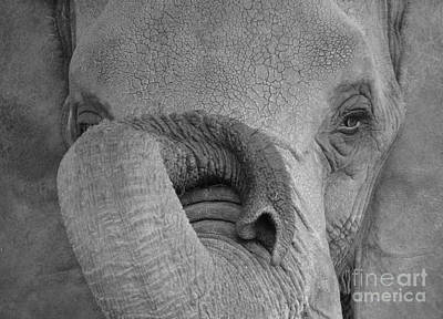 Photograph - The Elephant's Eye by Randy J Heath