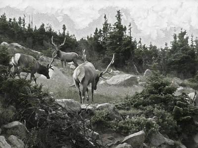 Elk Digital Art - The Elk Painterly 2 by Ernie Echols