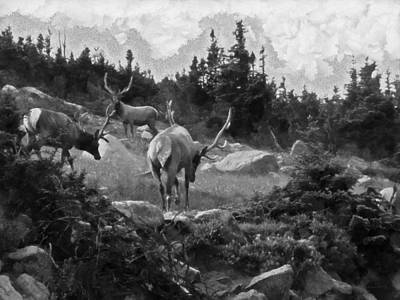 Digital Art - The Elk Painterly by Ernie Echols