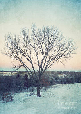 The Elm In Winter Art Print by Kay Pickens