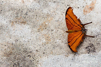 The Elusive Butterfly  Art Print by Rene Triay Photography
