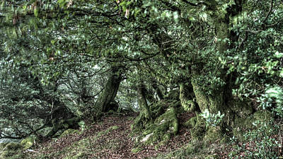 Photograph - The Elven Forest No1 by Weston Westmoreland