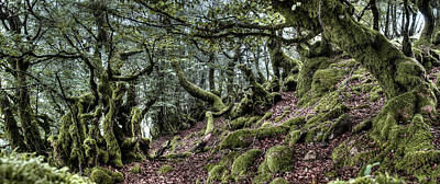 Photograph - The Elven Forest No2 by Weston Westmoreland