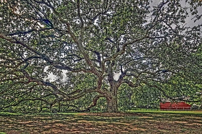Photograph - The Emancipation Oak At Hampton University by Jerry Gammon