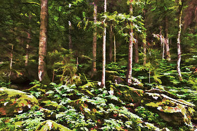 Ferns Photograph - The Enchanted Forest by Marcia Colelli