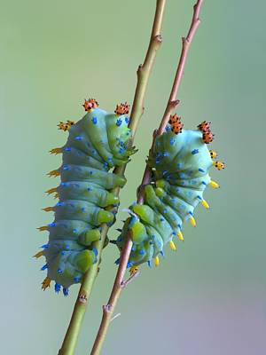 Caterpillars Photograph - The Encounter by Jimmy Hoffman