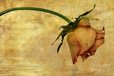 Floral Photograph - The End Of Love by John Edwards