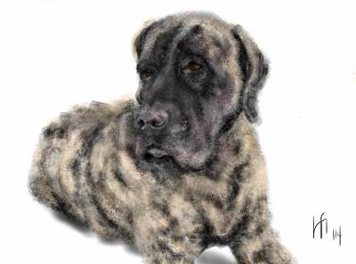 The English Brindle Mastiff Art Print by Lois Ivancin Tavaf