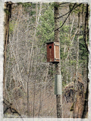 Photograph - Birdhouse Environment Of Hamilton Marsh  by Roxy Hurtubise