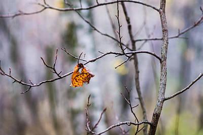 The Essence Of Autumn - Featured 3 Art Print by Alexander Senin