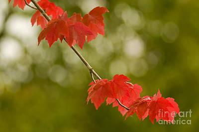 The Essence Of Autumn Art Print
