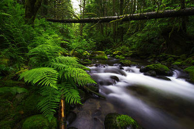 Photograph - The Essence Of The Northwest  by Dustin  LeFevre