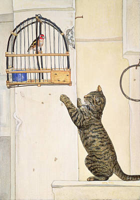 Cage Painting - The Essuaira Bird by Ditz