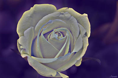 Photograph - The Ethereal Rose  by Renee Anderson