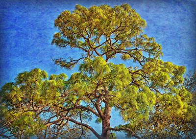 Photograph - The Pine Tree by Hanny Heim