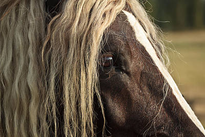 Forelock Photograph - The Eye D4849 by Wes and Dotty Weber