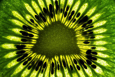 Kiwi Photograph - The Eye by Gert Lavsen