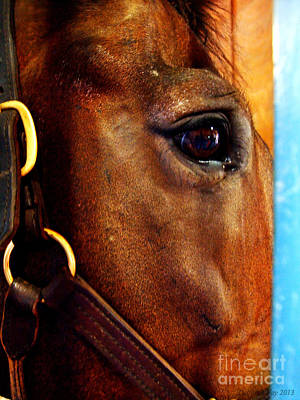 The Eye Of A Champion Da Hoss Art Print