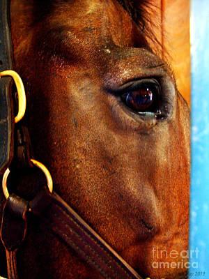 The Eye Of A Champion Da Hoss Art Print by Deborah Fay