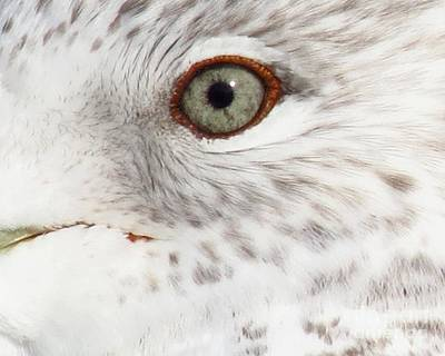 Photograph - The Eye Of The Gull by Donna Cavanaugh