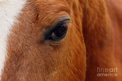 Photograph - The Eyes Have It by Denise Pohl