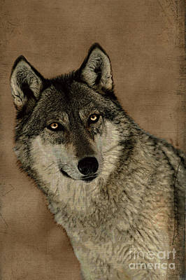 Photograph - The Eyes Of A Grey Wolf by Dan Friend