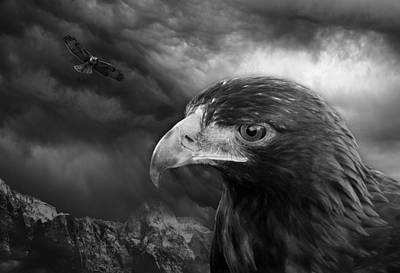 The Eyes Of The Hawk Art Print
