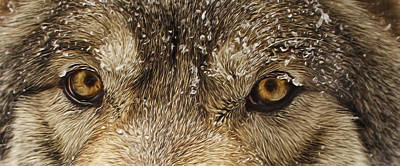 Print featuring the photograph The Eyes Of The Wolf  by Brian Cross