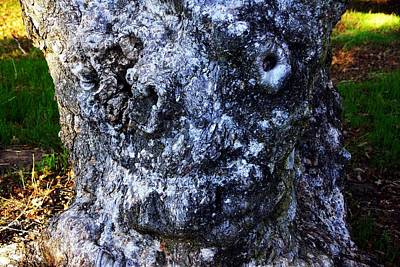 Photograph - The Face In The Tree by Michael Courtney