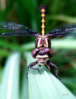 Art Print featuring the photograph The Face Of A Dragonfly 01 by George Bostian
