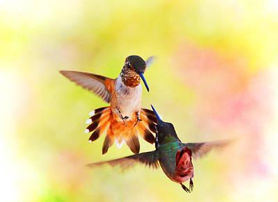 Birds Photograph - The Face Off by Lynn Bauer