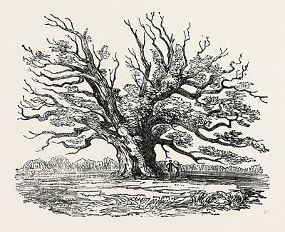 Aged Wood Drawing - The Fairlop Oak In Hainault Forest by English School