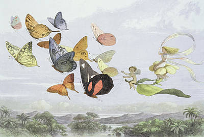 Fluttering Drawing - The Fairy Queen's Carriage by Richard Doyle