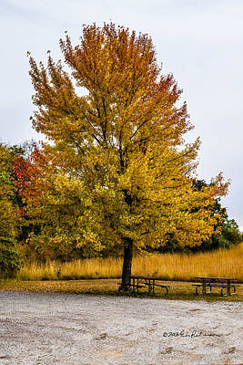 Photograph - The Fall Tree by Edward Peterson