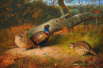 Red Blue And Green Birds Painting - The Fallen Beech - A Cock And Three Hen Pheasants With A Wasp by Celestial Images