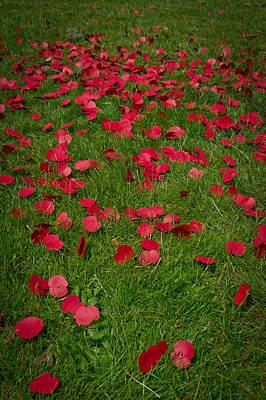 Bomber Command Photograph - The Fallen by Gary Eason