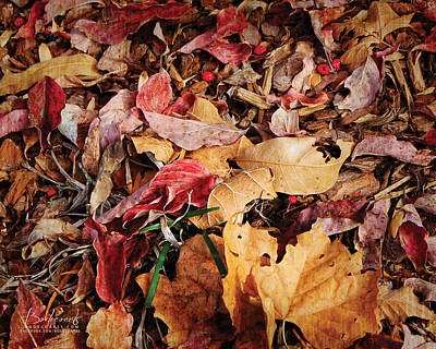 Photograph - The Fallen by Robin Lewis