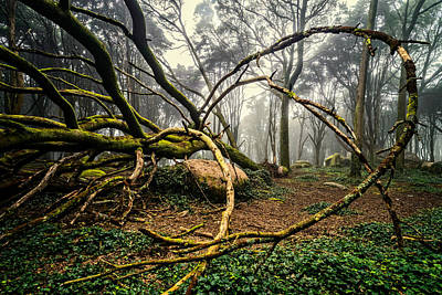 Photograph - The Fallen Tree II by Marco Oliveira